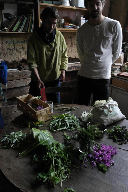 picking up wild herbs - workshop in Nowina